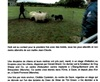 Vign_2eme_article_troupeau